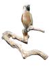 Java Parrot MultiPerch  - Large