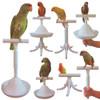 The Percher - Portable Parrot Training Perch