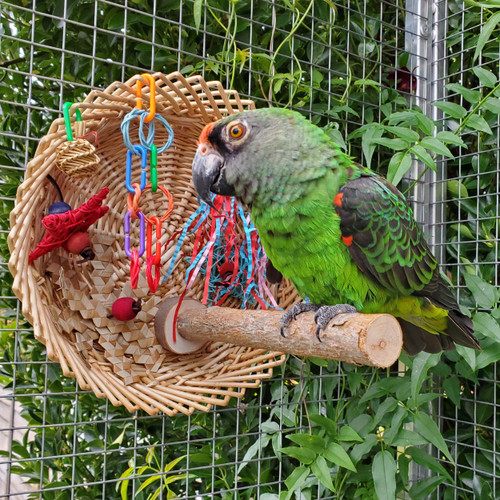 Busy Birdie Play Perch for Parrots and Parakeets