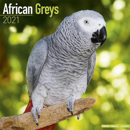 2021 African Grey Parrot Calendar