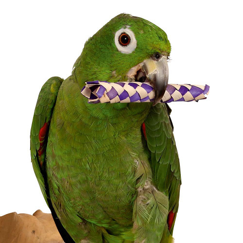 Woven Palm Leaf Sticks - Foot Parrot Toy - Pack of 12