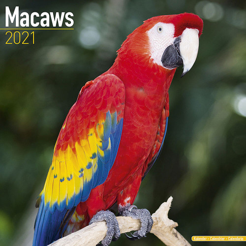 2021 Macaw Calendar