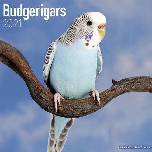 2021 Budgie Calendar