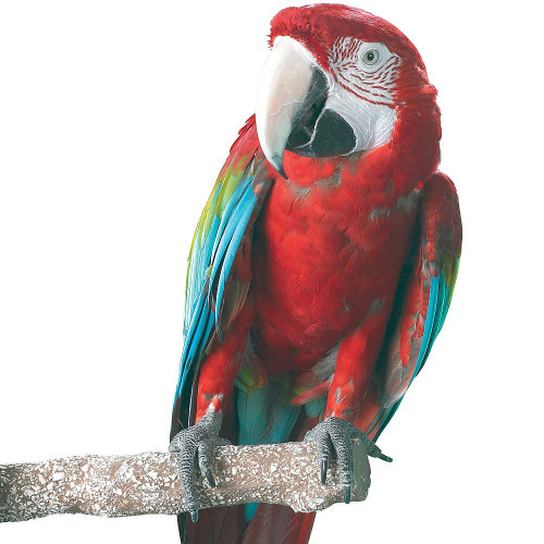 Beach Branch Perch - Large - Edible Parrot Perch