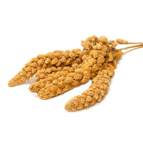 Yellow Millet Sprays 250g - Parrot Treat