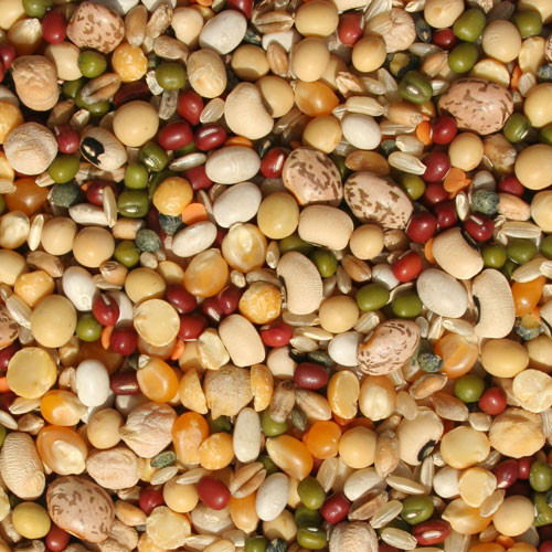 Tidymix Pulse & Rice Soaking Parrot Food