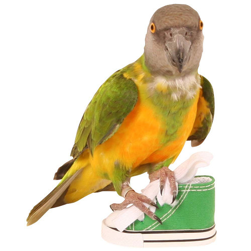 Sneaker Foot Toy For Parrots