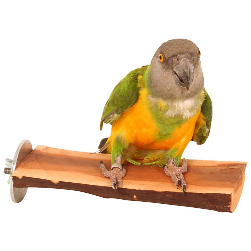 Manzanita Flat Perch - Small
