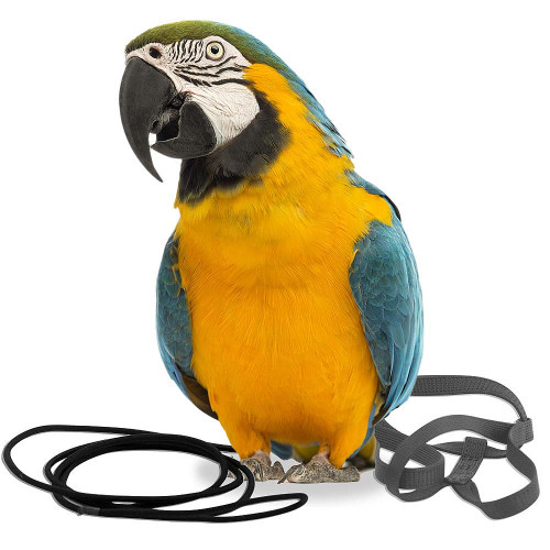 The Aviator Parrot Harness - Large