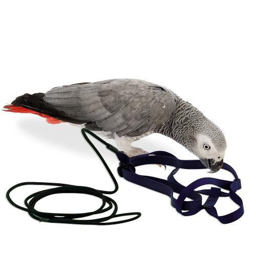 The Aviator Parrot Harness - Medium