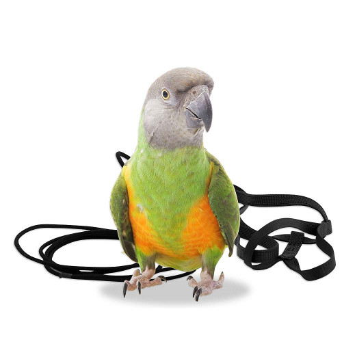 The Aviator Parrot Harness - XSmall