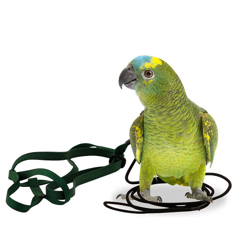 The Aviator Parrot Harness Small