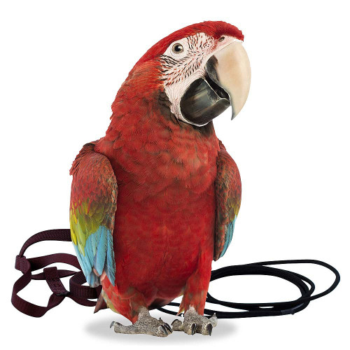 The Aviator Parrot Harness - XLarge
