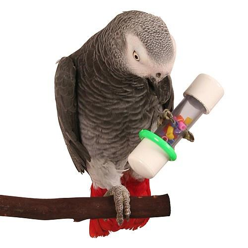 Rattle Foot Parrot Toy - Medium