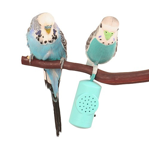 Hagen Budgie Buddy Singing Parakeet Interactive Toy