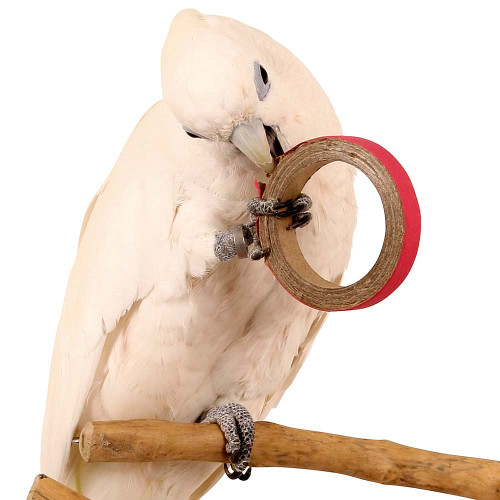 Birdie Bangles Foot Parrot Toy - Small Pack of 100