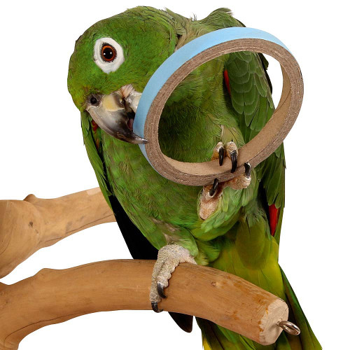 Birdie Bangles Foot Parrot Toy - Large - Pack of 50