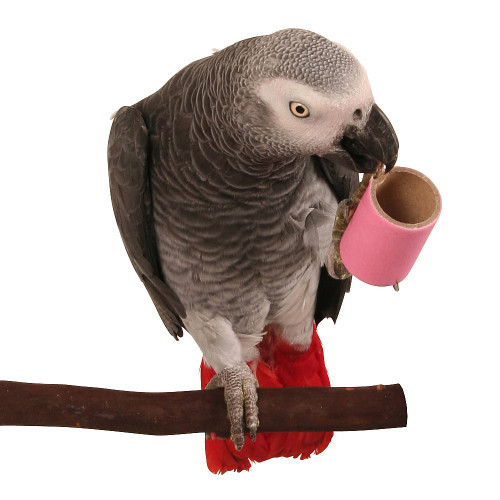Parrot Pipes - Small