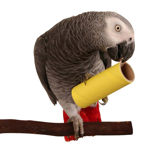 Chew & Forage Pipes Foot Parrot Toy - Large