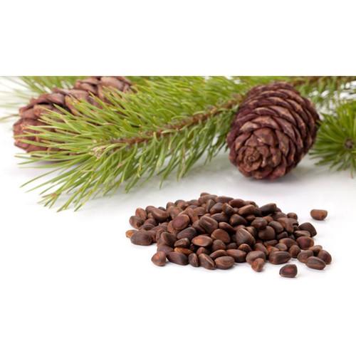 Cedar Nuts Parrot Treats 250g