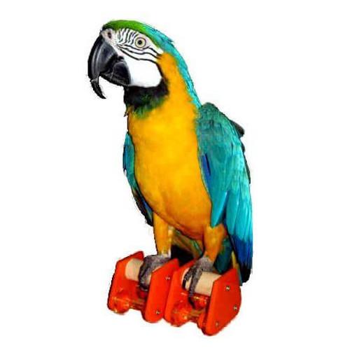 Pair Roller Skates - Large - Trick Training Parrot Toy
