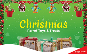 Christmas Parrot Toys & Treats