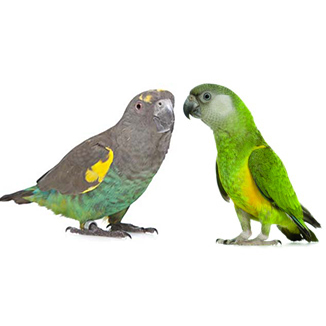 Meyers and Senegal Parrots