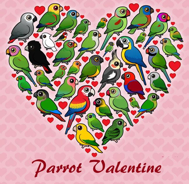 parrot-valentine.jpg