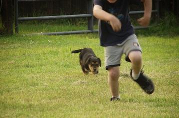 chased-male.jpg