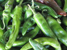 Sandia Hot Chile has a awesome flavor but is consistently hot. It is a long slender chile.