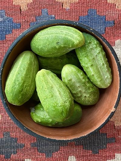 cucumbers-400.jpg
