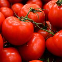 harvestrdtomatoes.jpg