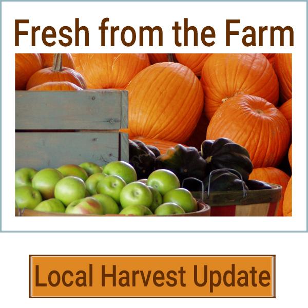 localharvestupdate-pumpkins.jpg