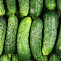 picklingcucumbers.jpg