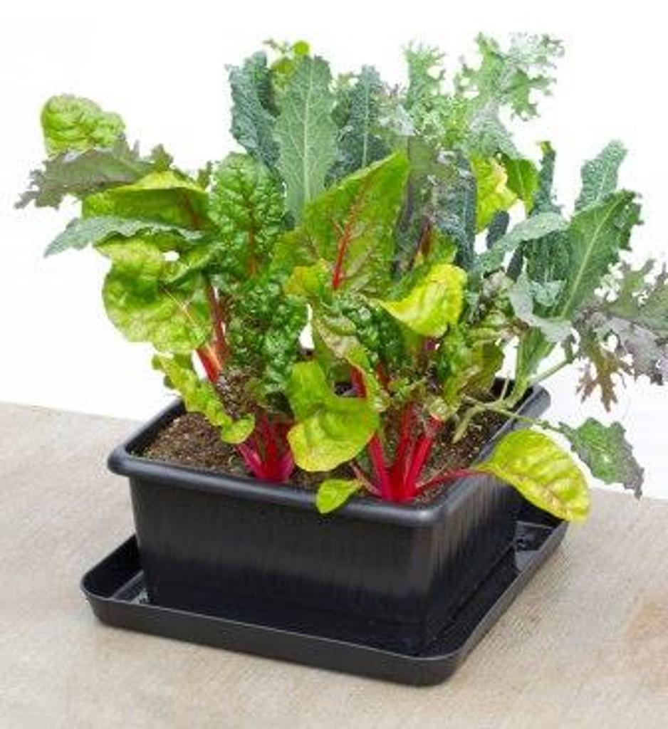 Metro-Grower Salad Greens
