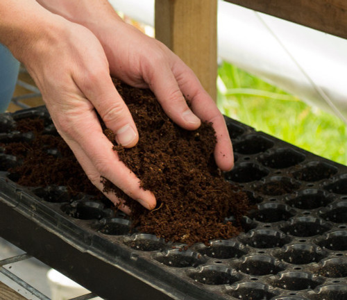 Coconut Coir as Seed Growing Medium