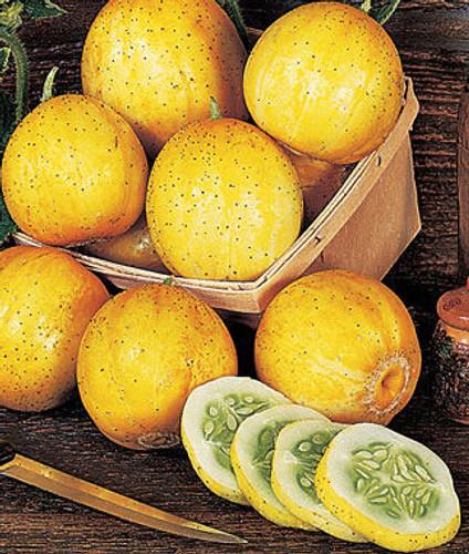 Cucumber, Lemon OG