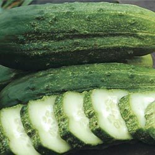 Cucumber, National Pickling OG