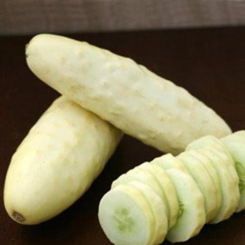Cucumber, Silver Slicer OG