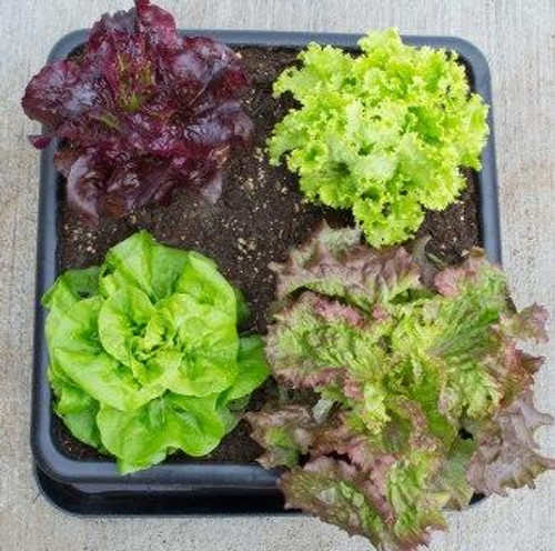 Four-Square Gardening with the Metro-Grower