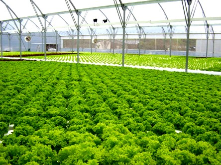 greenhouse-hydroponic.jpg