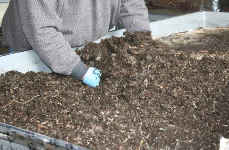 hand-harvesting-worms.jpg