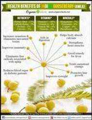 Amla the Powerhouse of Health Benefits