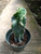 """Cereus Forbesii  """"Spiralis"""" Cactus"""