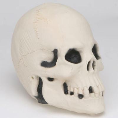Skull, Foam