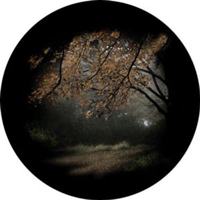 Autumn Glade - Rosco Color Glass Gobo #86703