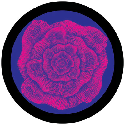 Artistic Flower - Apollo Glass Gobo #C2-0125