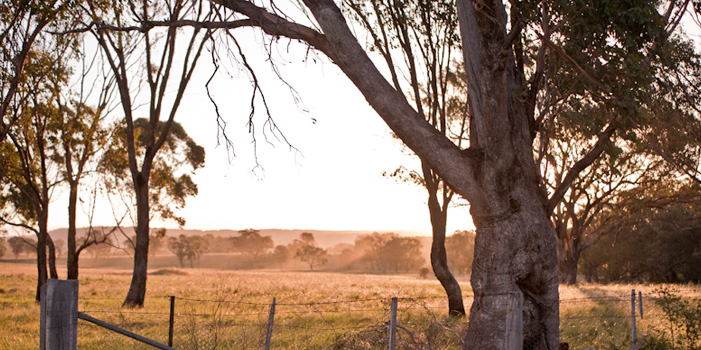 Occupying over 3000 acres, our farm is located 90km north of Tamworth in the North West of New South Wales.