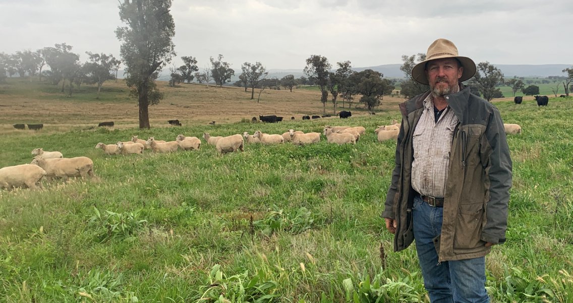 Matt Pearce, Canowindra NSW - Pasture Fed Lamb