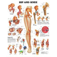Hip and Knee